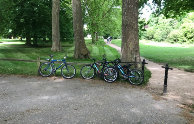 4 bikes leaning up against a wooden fence, next to a tree. There is a path through a field in the background.